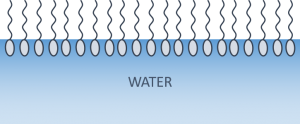 Surfactant water-air interface